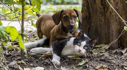 Cane gatto animali cuccioli