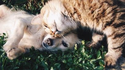 Animali cane gatto