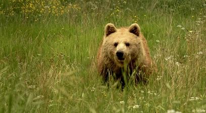 Natura orso marsicano