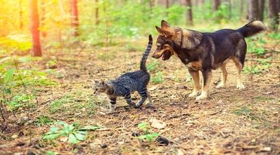 Chiara assicurazioni monitora cuccioli casa