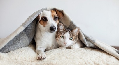 In aumento cani e gatti assicurati
