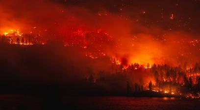 Deforestazione  dagli incendi alle soluzioni possibili