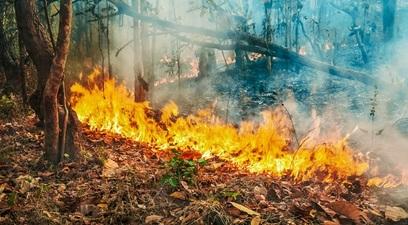 Il fenomeno degli incendi in australia