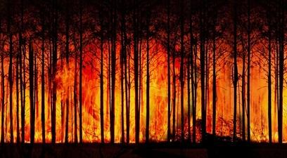 Incendi in amazzonia  pericolosamente vicini al punto di non ritorno