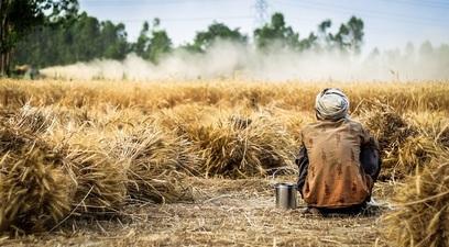 L'alimentazione umana mangia il pianeta