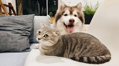 Nuova polizza animali casa