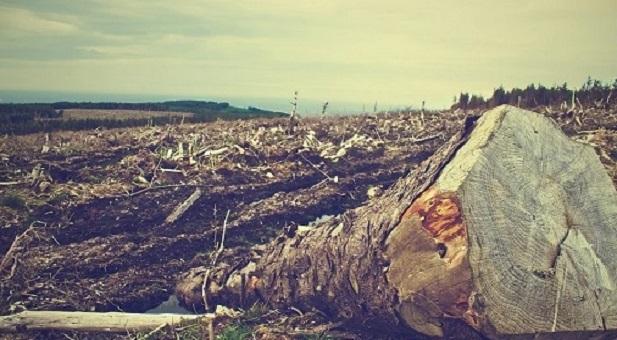 dal-2004-sono-scomparsi-43-milioni-di-ettari-di-foreste-tropicali