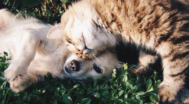 europ-assistance-per-cani-e-gatti