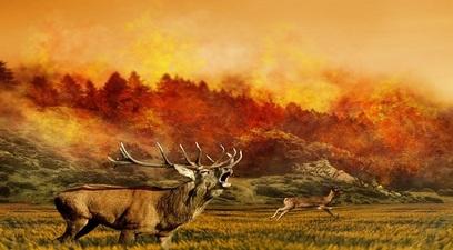 Canada  il caldo brucia un intero villaggio